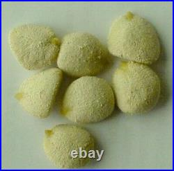 50 PACKS (600) Nuez de la India, original 100% GARANTIZADA, indian nut seed