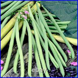 6x Climbing Bean'Cobra' Plug Plants (No Seeds) Ready Now