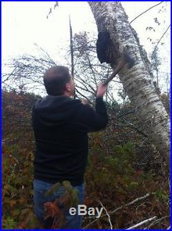 CHAGA 5LB Large Chunks Wild Harvested 80 oz FAST shipping from Maine