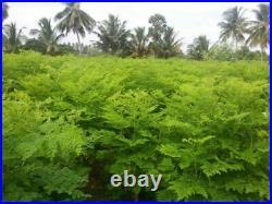 MOGO USDA Organic Moringa Leaf Powder, Size 4oz-10LB Detox, Weight Loss, SUPERFOOD