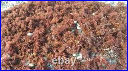 PURPLE IRISH MOSS 20LB NO salt added 100% NATURAL SEA MOSS JAMAICAN WILDCRAFTED