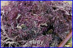 PURPLE IRISH MOSS 5LB NO salt added 100% ORGANIC SEA MOSS WILDCRAFTED