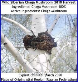 WILD Siberian Chaga Mushroom 22.05 Lbs (10 kgs) 2018 Harvest Inonotus obliquus
